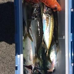 6月12日(月)午前便・アジ・イサキ釣りの写真その5