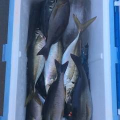 6月16日(金)午前便・イサキ、アジ釣りの写真その7