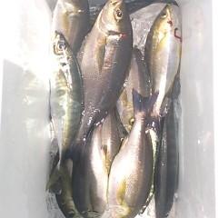 6月17日(土)午前便・イサキ、アジ釣りの写真その8
