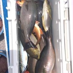 6月17日(土)午前便・イサキ、アジ釣りの写真その9