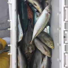6月18日(日)午前便・イサキ、アジ釣りの写真その4