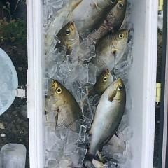 6月28日(水)午前便・イサキ釣りの写真その1