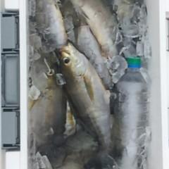 6月28日(水)午前便・イサキ釣りの写真その3