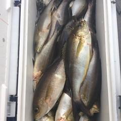 6月27日(水)午後便・イサキ釣りの写真その11