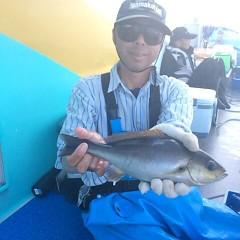 6月29日(木)午後便・イサキ釣りの写真その2
