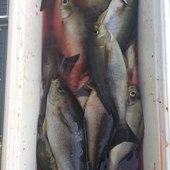 6月29日(木)午後便・イサキ釣りの写真その8