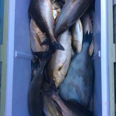7月12日(水) 午後便・イサキ釣りの写真その5