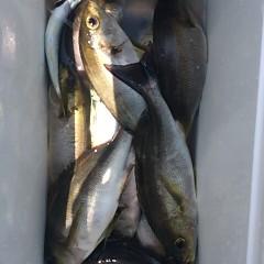 7月13日(木) イサキ釣りの写真その5