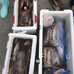 7月17日(月) 一日便・スルメイカ釣りの写真その9