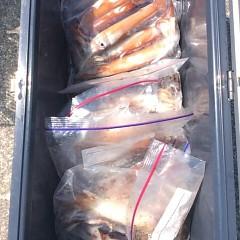 7月20日(木) 一日便・スルメイカ釣りの写真その10