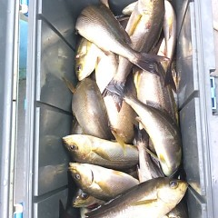 7月21日(金) 午前便・イサキ釣りの写真その10