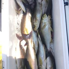 7月24日(月) 午前便・イサキ釣りの写真その1