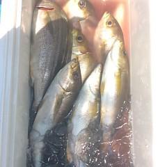 7月24日(月) 午前便・イサキ釣りの写真その3