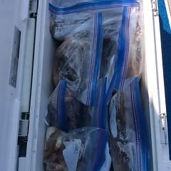 7月29日(土) 一日便・スルメイカ釣りの写真その11