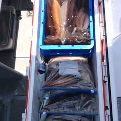 8月10日(木) 一日便・スルメイカ釣りの写真その10