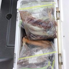 8月11日(金) 一日便・スルメイカ釣りの写真その11