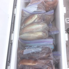 8月12日(土) 一日便・スルメイカ釣りの写真その6