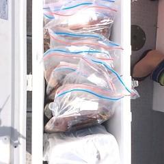 8月14日(金) 一日便・スルメイカ釣りの写真その7