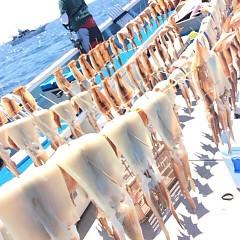 8月19日(土) 一日便・スルメイカ釣りの写真その7