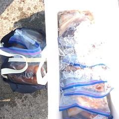 8月19日(土) 一日便・スルメイカ釣りの写真その11