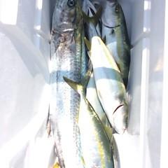 8月30日(水) 午前便・タテ釣りの写真その9
