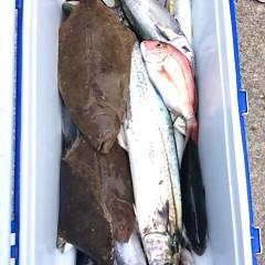 9月4日(月) 午前便・タテ釣りの写真その9