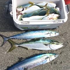 9月13日(水) 午前便・タテ釣りの写真その11