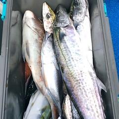 9月14日(木) 午前便・タテ釣りの写真その12