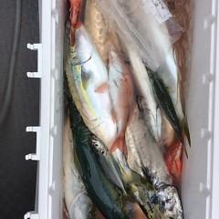 9月 20日(水)午前便・タテ釣りの写真その4