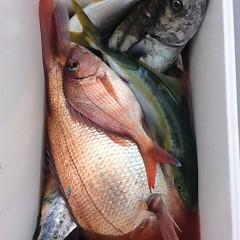 9月 20日(水)午前便・タテ釣りの写真その6
