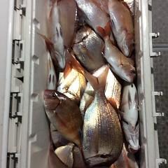 9月 21日(木)午後便・ウタセ真鯛の写真その1