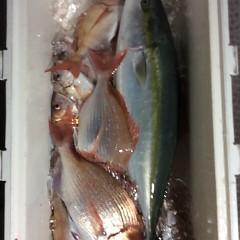 9月 21日(木)午後便・ウタセ真鯛の写真その2
