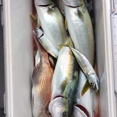 9月 22日(金)午前便・タテ釣りの写真その5