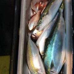 9月 25日(月)午後便・ウタセ真鯛の写真その9