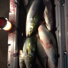 9月 25日(月)午後便・ウタセ真鯛の写真その11
