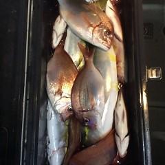 9月 25日(月)午後便・ウタセ真鯛の写真その12