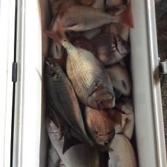9月 27日(水)午後便・ウタセ真鯛の写真その1