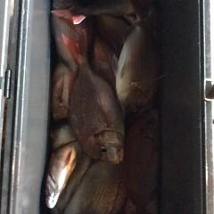 9月 27日(水)午後便・ウタセ真鯛の写真その3