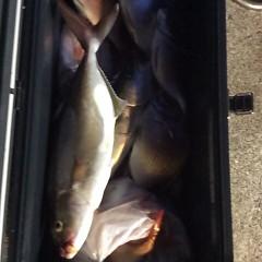 9月 27日(水)午後便・ウタセ真鯛の写真その4