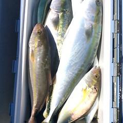 9月 29日(金)午前便・タテ釣りの写真その8