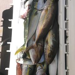 9月 29日(金)午前便・タテ釣りの写真その10