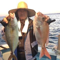 9月 29日(金)午後便・ウタセ真鯛の写真その7
