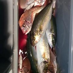 9月 29日(金)午後便・ウタセ真鯛の写真その9