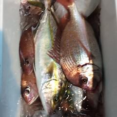 9月 29日(金)午後便・ウタセ真鯛の写真その12