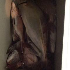 9月 30日(土)午後便・ウタセ真鯛の写真その7