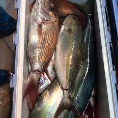 10月3日 (火)  午後便・ウタセ真鯛の写真その1