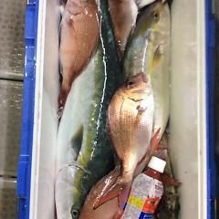 10月3日 (火)  午後便・ウタセ真鯛の写真その2