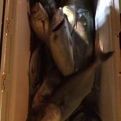 10月4日 (水)  午後便・ウタセ真鯛の写真その7