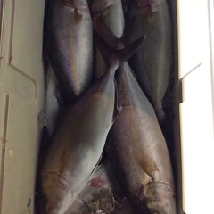 10月4日 (水)  午後便・ウタセ真鯛の写真その8