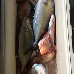 10月4日 (水)  午後便・ウタセ真鯛の写真その11